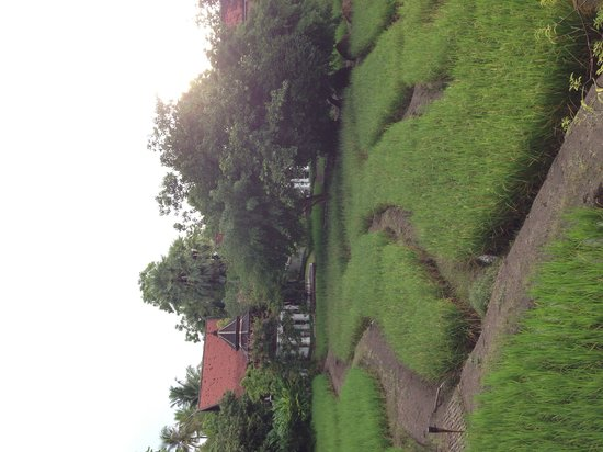 The Dhara Dhevi Chiang Mai : Rice field view from your villa