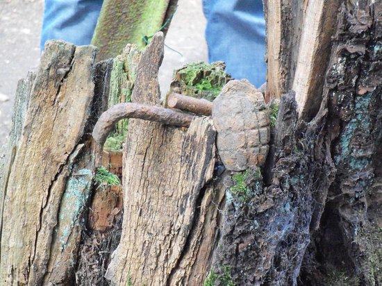 Terres de Memoire Somme Battlefield Tours: Hand grenade with a tree growing around it