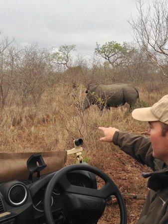 Ulusaba Rock Lodge: Safari - Rhino