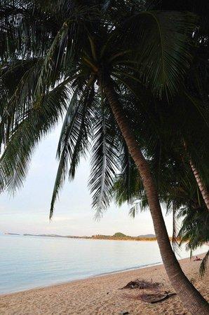 The Hammock Samui Beach Resort: area