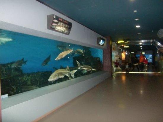 いつも清潔です - Picture of Otaru Aquarium, Otaru - TripAdvisor