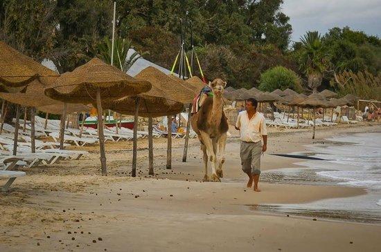 SENTIDO Aziza Beach Golf & Spa: Not everywhere you can see a Camel on the Beach. :)