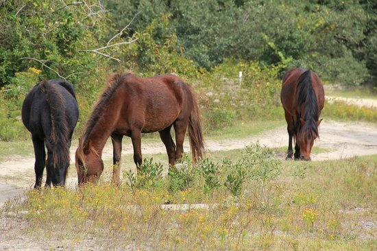 Corolla Wild Horse Fund, Inc. Tours