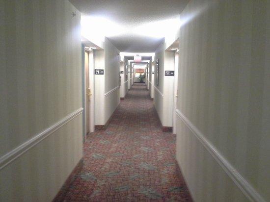 Hampton By Hilton Miami-Coconut Grove/Coral Gables : hallway