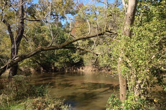 Raleigh, Kuzey Carolina: View of Neuse River from trail