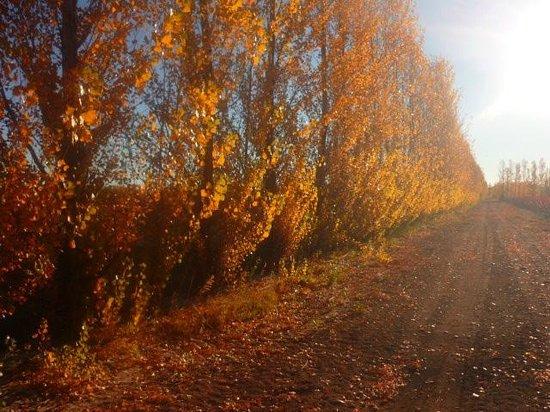 San Patricio del Chanar, Argentina: Viñedos en otoño - Bodega Secreto Patagónico