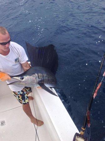 Costa Rica Dreams Sportfishing: Sailfish