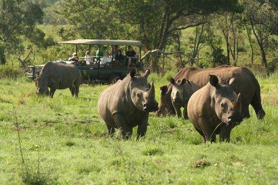 Makweti Safari Lodge: Spectacular game viewing