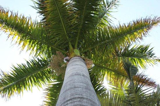 El Palmar Guest House: The Palm El Palmar Guesthouse