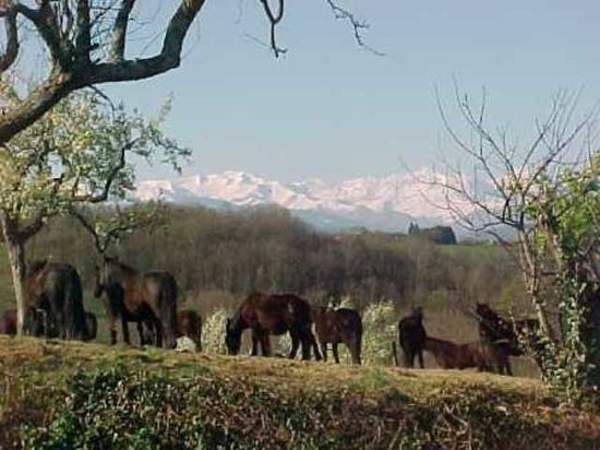 Haras Picard du Sant: Vue panoramique sur la Chaine des Pyrénées