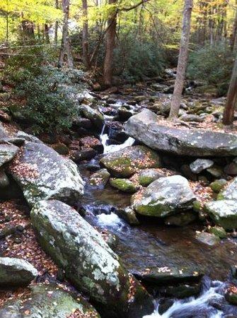 Roaring Fork : stream