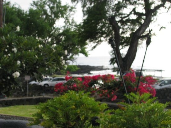 Kona Sugar Shack : daily view