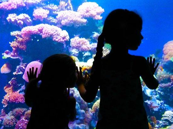 Underwater Observatory Marine Park : Kids love it
