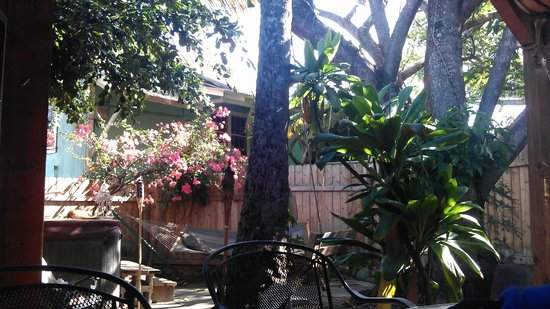 Banana Bungalow Maui Hostel: The cozy backyard. Great to relax on daytimes and party on nighttimes!