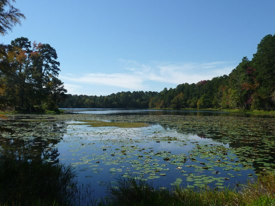 Daingerfield State Park: lake view along the trail