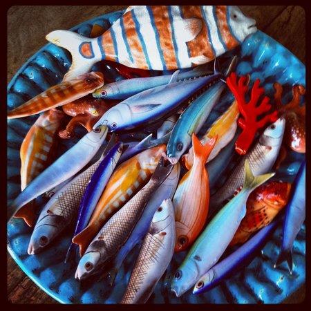 Maison La Minervetta: Fish