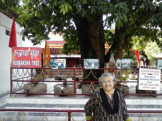 Parad Shivling: Rudraksha Tree