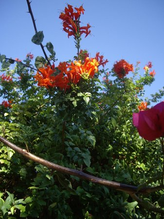 flowers in gaia garden