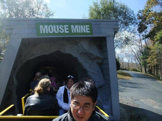 Tweetsie Railroad: Mouse Mine cave entrance