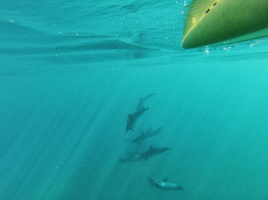 Hawaiian Paddle Sports: Some of the dolphins we saw