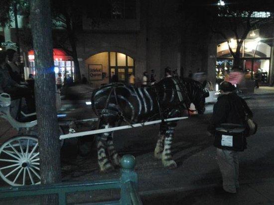 6th Street: Horse dressed as Zebra