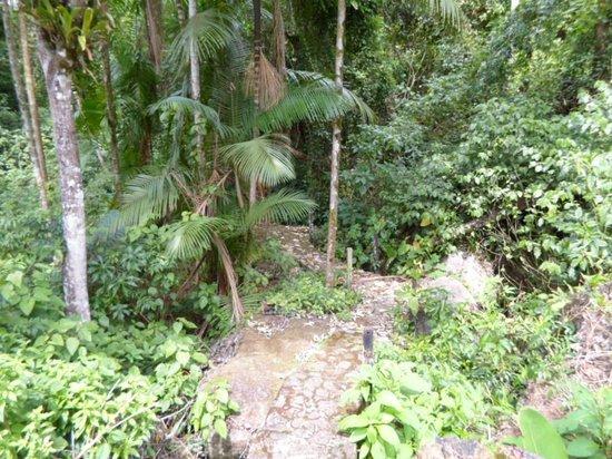 Pousada Canto do Curió: Caminho da cachoeira