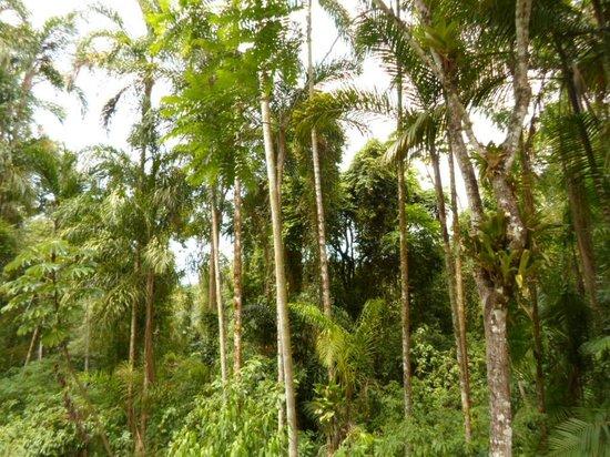 Pousada Canto do Curió: Área verde