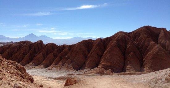 On Safari Atacama : Incredible!!