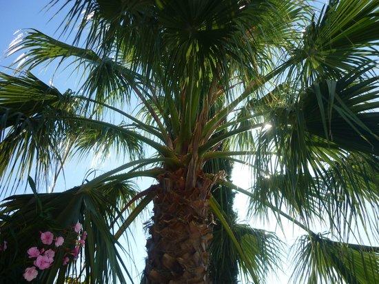La Mimosane : Espaces verts