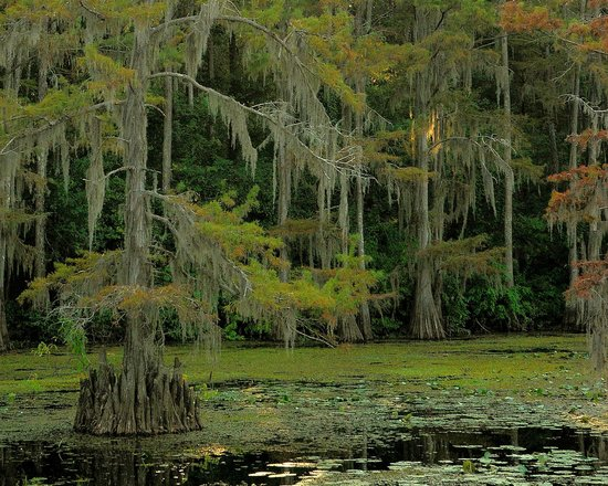 Caddo Lake Cabins Picture Of Caddo Lake State Park