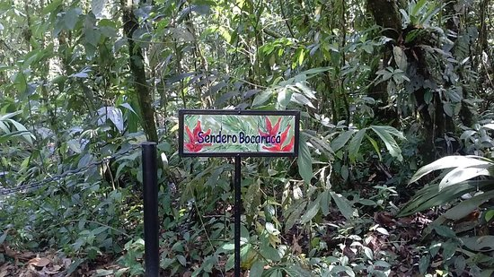 Rainforest Adventures: Trail entrance for walking tour