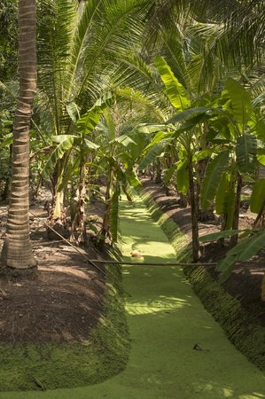 SpiceRoads Cycle Tours - Day Tours: a peek through the coconut trees