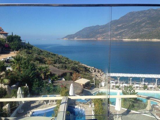 Peninsula Gardens Hotel: From Aqua Marine