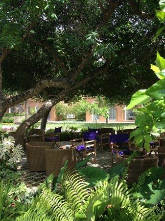 Medina Palms: relaxing garden terrace