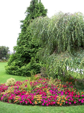 Jardin Massey : sol fleuri
