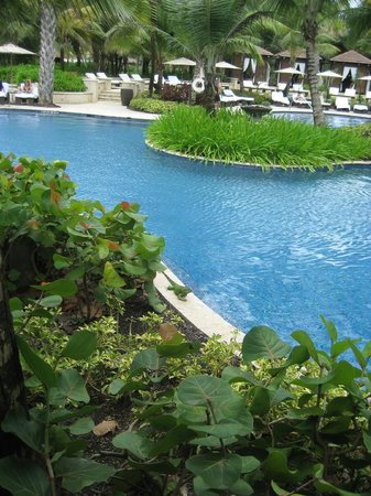 The St. Regis Bahia Beach Resort, Puerto Rico: Iguanas would hang out by the pool everyday