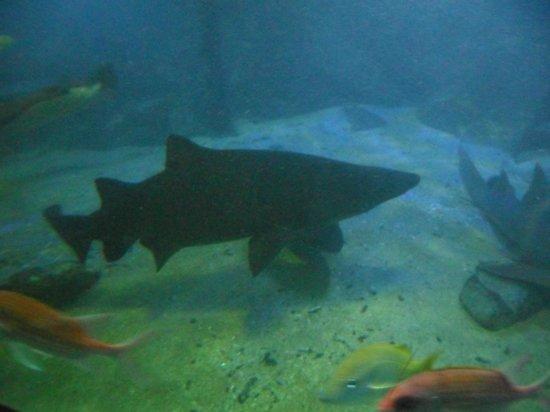 Peixe dragao - Foto de Aquario de Ubatuba, Ubatuba - TripAdvisor