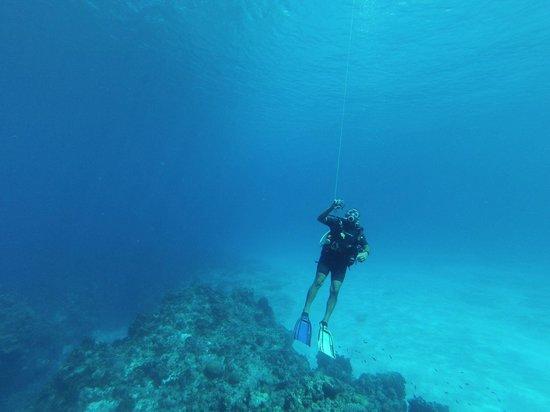 Chucho Underwater