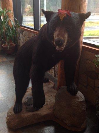 The Breeze Inn: Bear