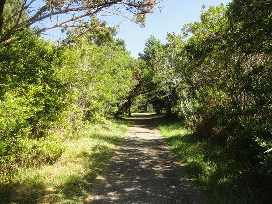 Near The Coastal Trail Picture Of Mendocino Coast Botanical Gardens Fort Bragg Tripadvisor