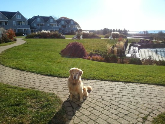 Riley at Inn by the Sea