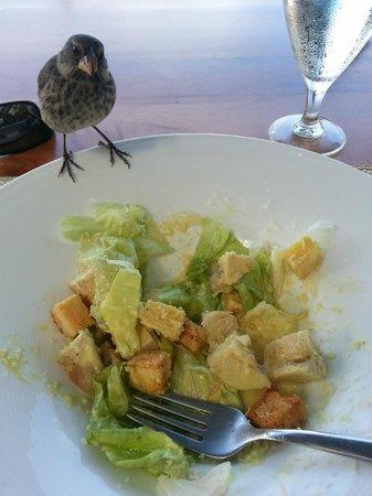 Finch Bay Galapagos Hotel: Finch audacieux sur la terrasse