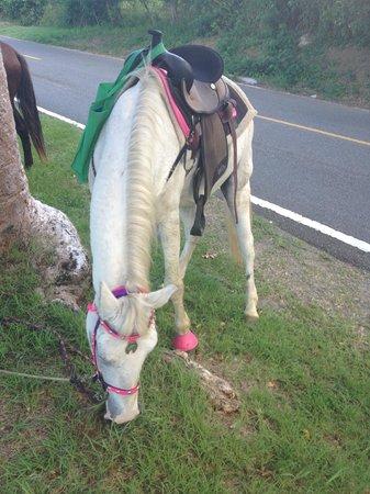 Taxi Horses: My horse Clifford