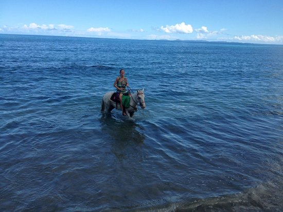 Taxi Horses: Wading in the water