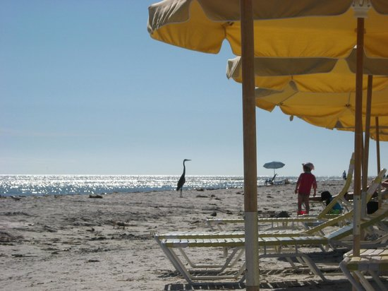 Seaside Inn: Beach chair view of passing egret/heron