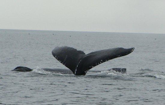Clover Pass Resort: Whales!