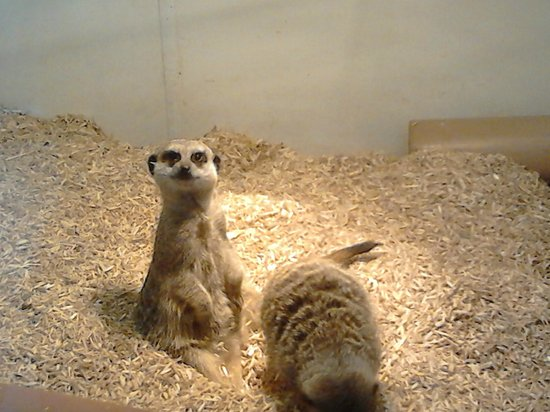simples!! - Picture of Natureland Seal Sanctuary, Skegness ...