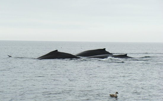Clover Pass Resort: And more whales!!!