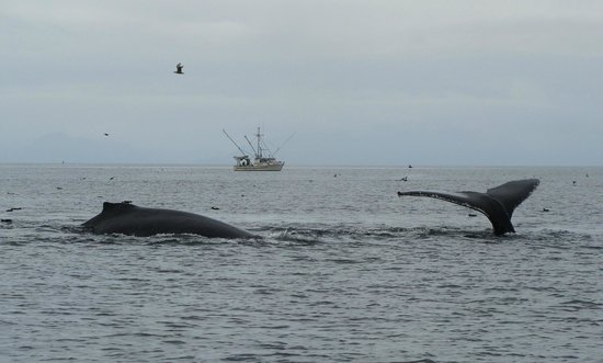 Clover Pass Resort : Whales!