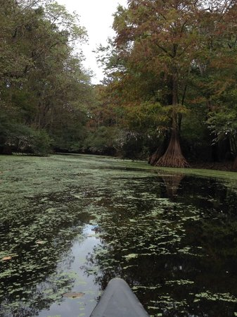 Wilderness Southeast Tours: Duckweed and Cyprus #1